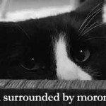 Acesta este cel mai bun video cu pisici de pe internet