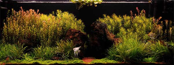 acvaristica-5