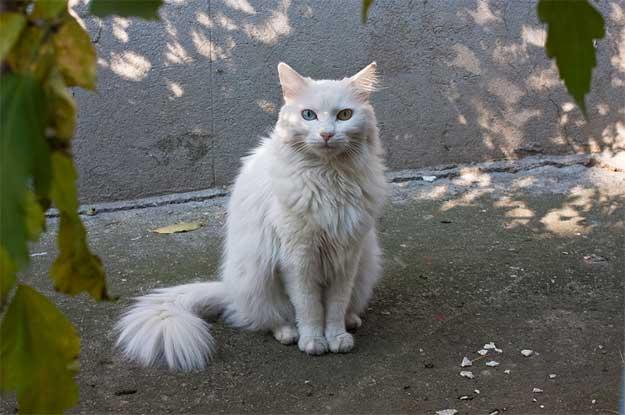 Pisicile-Poetice-4