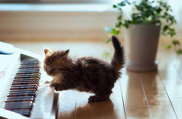 muzica-pisici