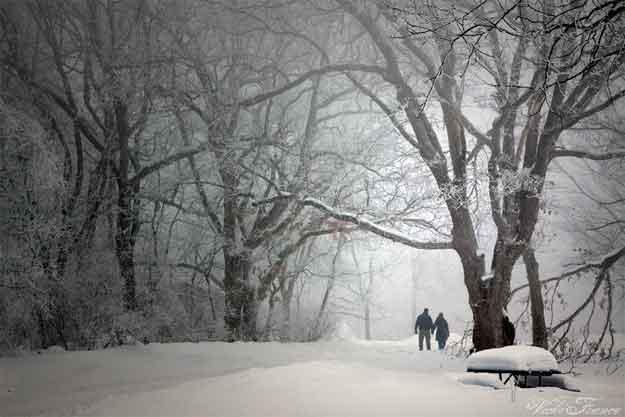 prima-ninsoare