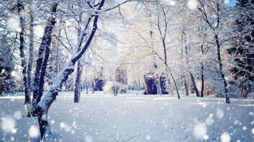 Iarna lipsei tale