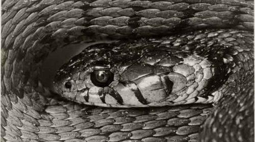 Șarpele din camera de zi
