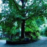 Cinci copaci neobisnuiti