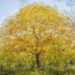 Padurea unui singur copac