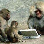 Facebook pentru cimpanzei