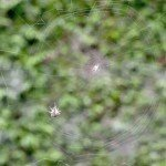 Pânza de păianjen de Goya