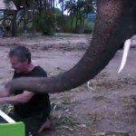 Concert de pian cu elefant