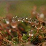 Splendoare în iarbă: o galerie de imagini