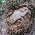 Spiritele copacilor