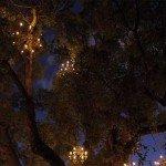 Copacul-candelabru