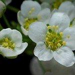 Veșnicia și vremelnicia florilor