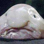 Cel mai urât pește din lume
