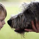Sensul vieții unui câine