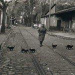 O scurtă istorie a fotografiei în 15 pisici