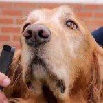 Balada telefonului mobil