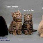 Nu mângâiați pisica: stricați microfoanele!