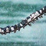 Zece fotografii în zăpadă