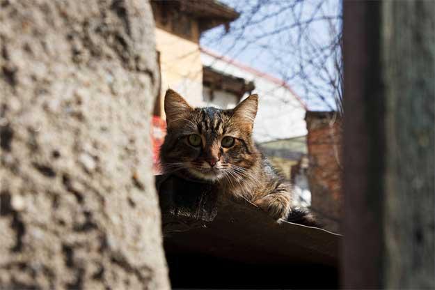 Pisicile-Poetice-6
