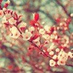 Zece gânduri de primăvară