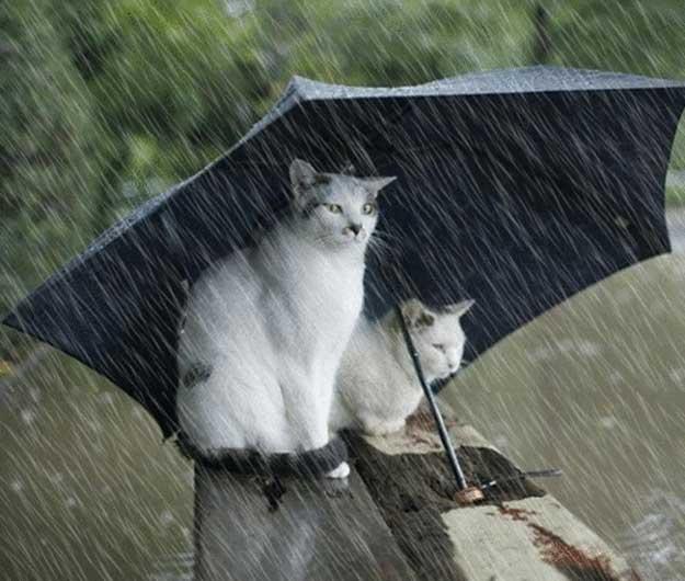 ploaie-8