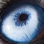 Priveliștea ochilor tăi