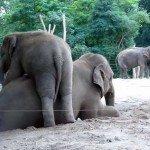 Două povești, patru elefanți