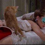 Pisicile în cinematografie