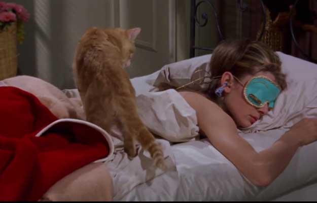 pisici-cinematografie