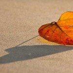 Cum îți influențează toamna viața amoroasă