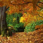 Nostalgii autumnale