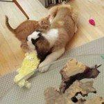 Dragă pisicuțo…