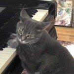 Dora, pisica pianistă