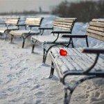 """""""Inima e câteodată un cimitir cu gropi multe"""""""