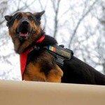 România: viață de câine