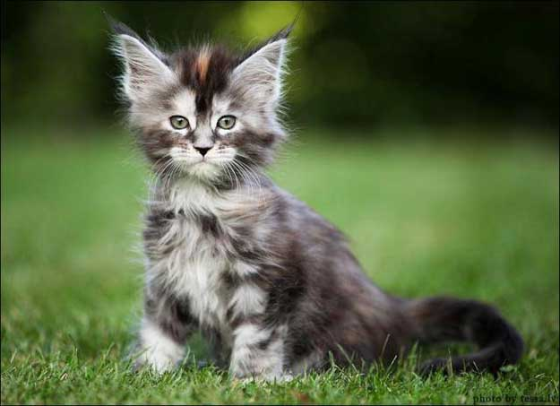pisica-altfel