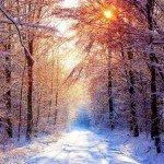 Dimineață de iarnă