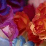 Rondelul rozelor de august