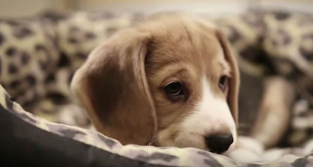 jurnal-catel