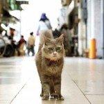 Trei linkuri pentru iubitorii de pisici