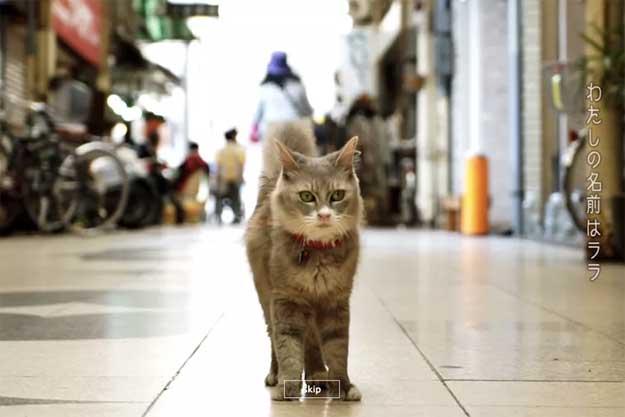 linkuri-pisici