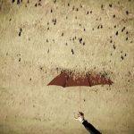 Panseu pe marginea ploii