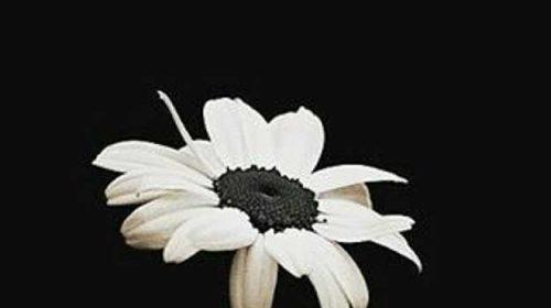 Toți suntem semințe născute din Iubire