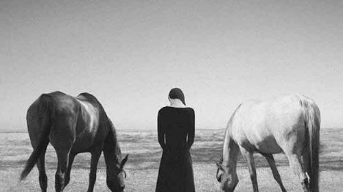 Șapte cai albi