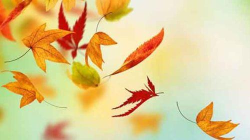 Cuvintele-s nervuri de frunze