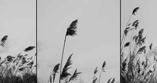 Paşi risipiţi în vânt