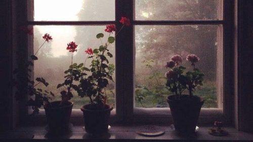 Soare peste florile de la fereastră