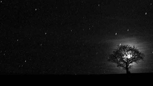 În veşnicia fără cuvinte